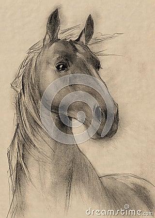 Horse Head Pencil Drawings on western head drawing