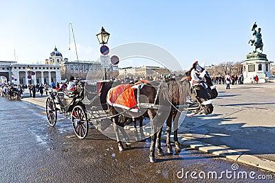 equestrian horses dreams meets austria begins