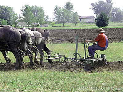 Horse Drawn Disk Harrow