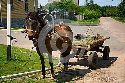 Horse-drawn vehicle in rural area