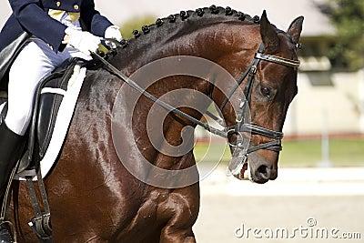 Horse dressage outdoors