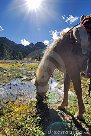 Horse drinking in High Altitude