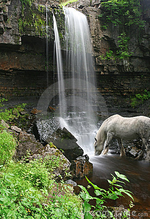 Horse drinks at foot of Waterfall