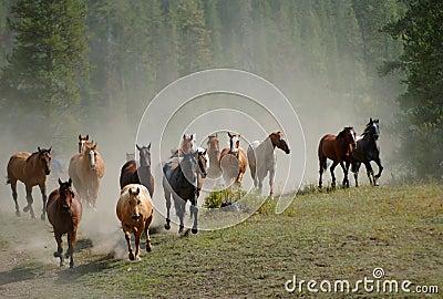 Horse Drive 2
