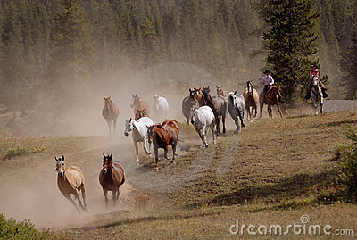 Horse Drive with Two Cowgirls