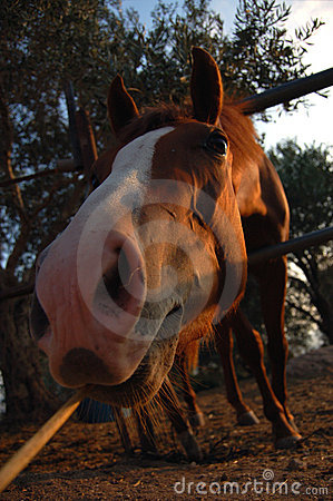 A Horse Eating. Stock Image - Image: 1240701