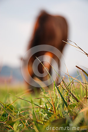 Horse eating in background