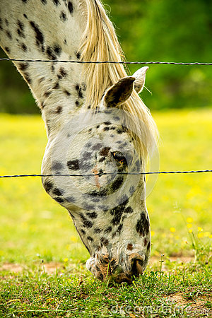 Free Horse Eating Grass Royalty Free Stock Photos - 46152198