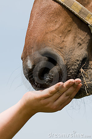 Free Horse Eating Grass Stock Images - 9875614