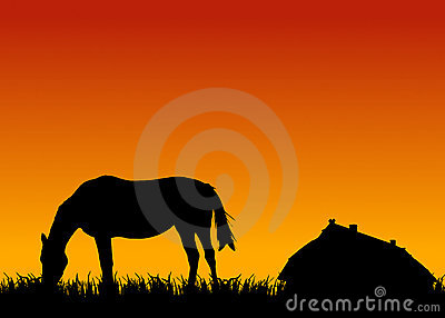 Horse eating grass at sunset near stable