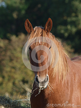 Free Horse Eating Hay Stock Images - 36782834