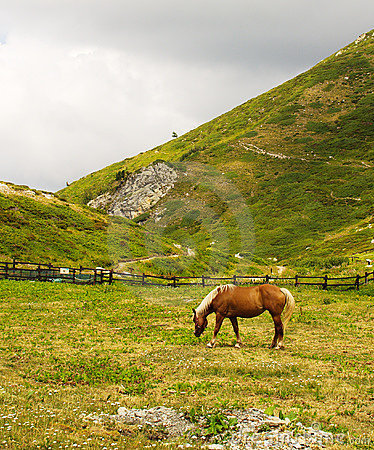 Free Horse Eating In A Meadow Stock Photography - 6031502