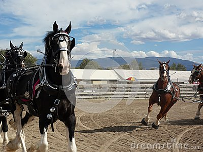 Horse expo 2013 in Montana Editorial Stock Image