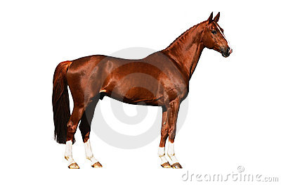 Horse exterior isolated