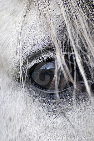 Free Horse Eye Stock Photo - 13746660