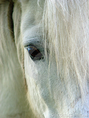 Free Horse Eye Royalty Free Stock Photography - 28567