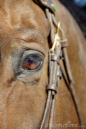 Free Horse Eye Stock Images - 5572684