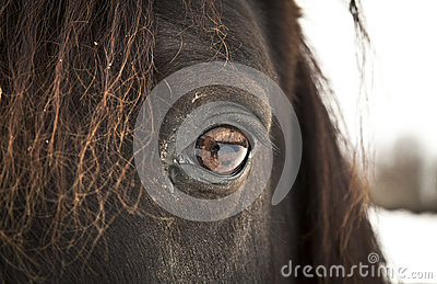 Horse Eye (left eye).