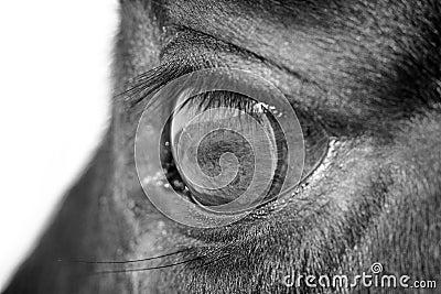 Horse eye macro