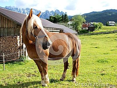 Horse of farm