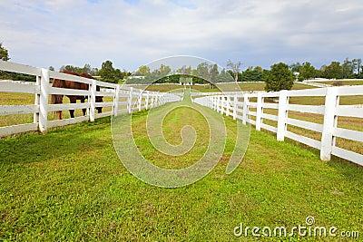 Horse farm