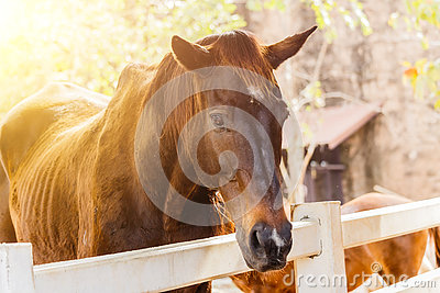 Horse on a farm behind a wooden fence. Stock Photo