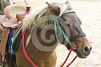 Horse on farm Chokchai