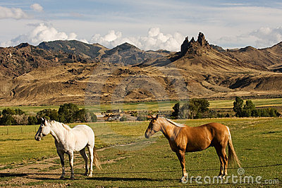 Horse farm with mountain landscape