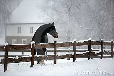 Horse Farm in Winter
