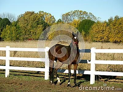 Horse in field in fall