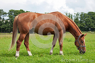 Horse, field and sky