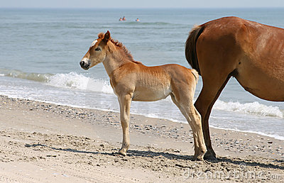 Horse and foal on beach