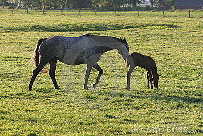 Horse and foal in green field