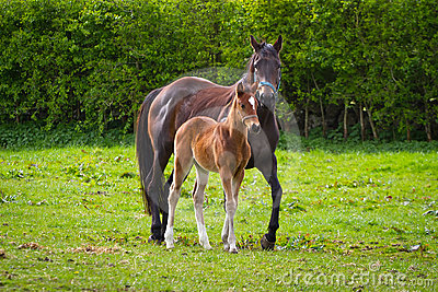 Horse and the foal on the meadow