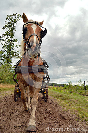 Horse in front