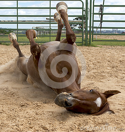 Free Horse Fun Royalty Free Stock Photography - 37094097
