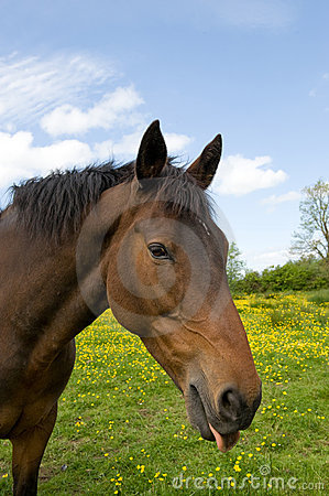 Horse with funny expression