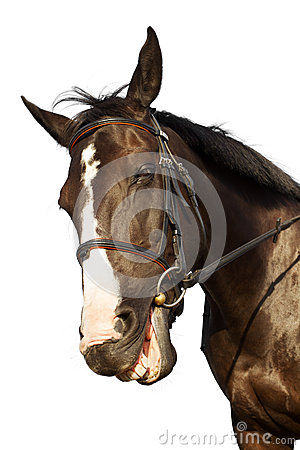 Free Horse Funny Smiling Over White Background Royalty Free Stock Photography - 33924167