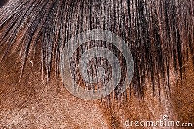 Horse fur