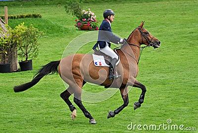 Horse Gallop Editorial Stock Photo
