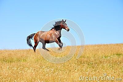 Horse gallops 2