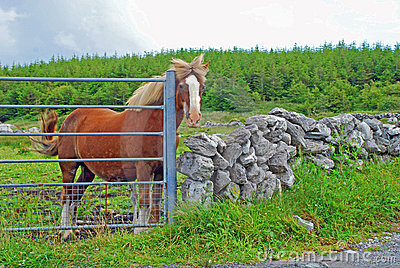A Horse At The Gate