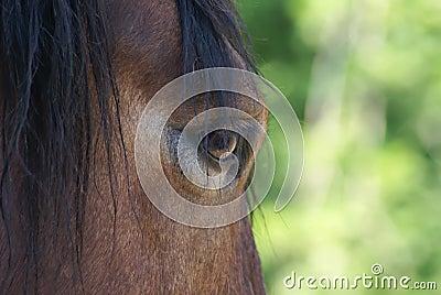 Horse glance