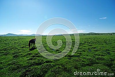Horse on grassland