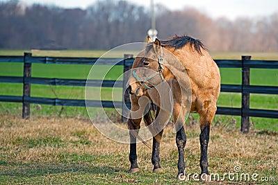 Horse Grazing