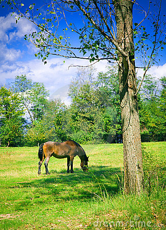 Horse Grazing Stock Photography - Image: 3987132