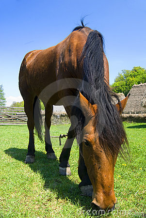 Free Horse Grazing Royalty Free Stock Photography - 9146617