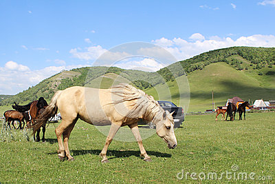Horse grazing on a green field