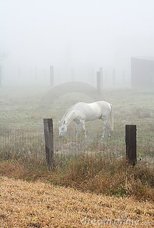 Horse grazing in a heavy mist