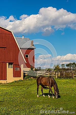 Free Horse Grazing In Farm Field Stock Photos - 46884773